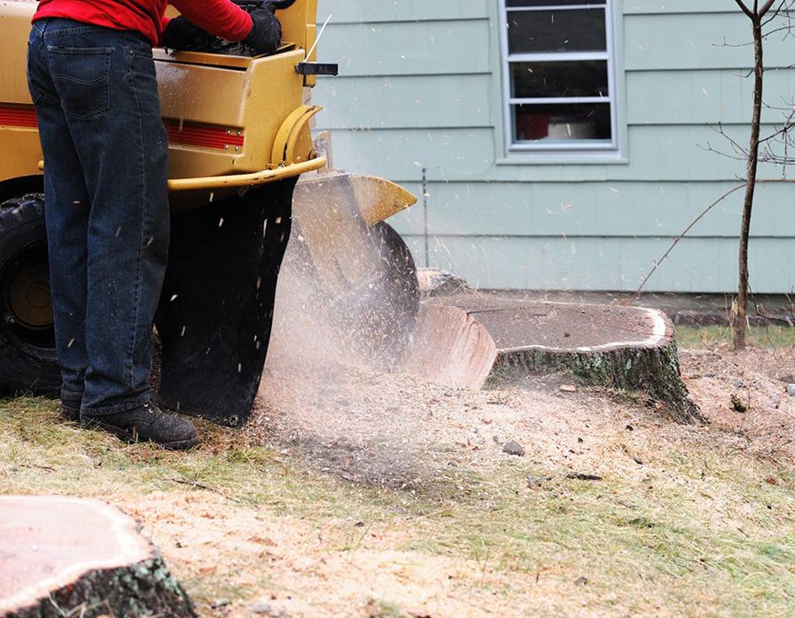 expert arborist griding down a stump