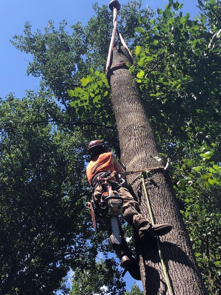 climbing tree with safety equipment