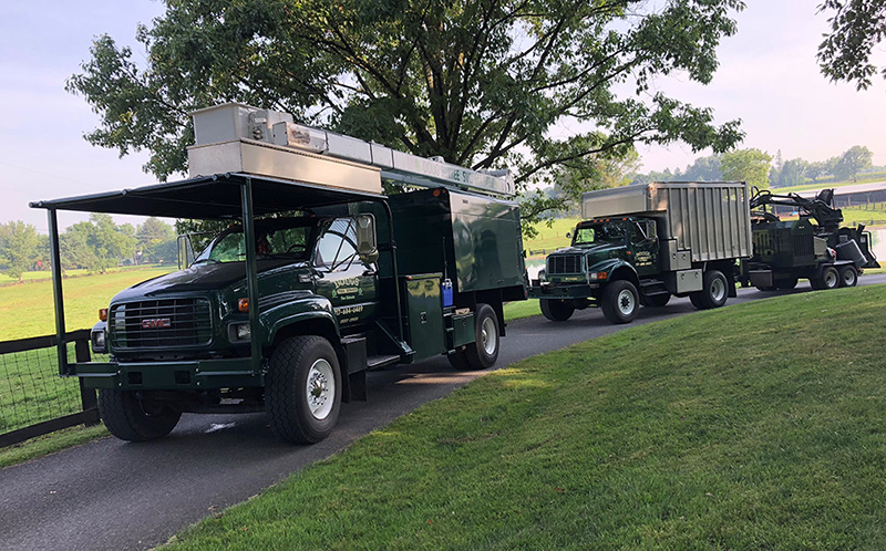 fleet of tree trucks